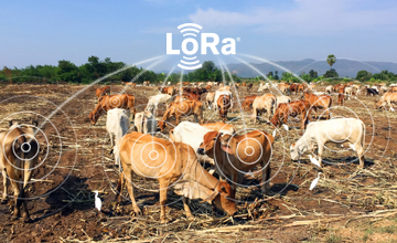 LoRa-based smart agriculture cattle health monitor