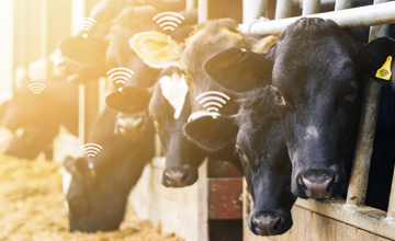 LoRa-based ingestible cattle health tracker for smart agriculture